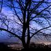 Fény a kopasz fák alatt