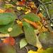 Kőkorlát ősszel