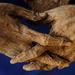 Váci múmiák-kezek