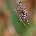 Pók és hálója