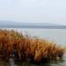 őszi Kis-Balaton