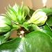 növények 035