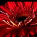 Album - fotóim virágokról