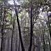 Album - Mesél az erdő