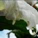Egy csepp virág