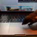 sünös macintosh