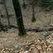A Kánya-szurdok kis patakja márciusban