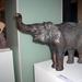 Székely Katalin- elefánt
