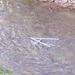 egri vízlépcső