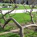 a fák nem nőnek az égig...