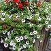 virágok, színek