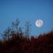 Hold, a visszapillantó