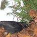 madarak, ...az talál