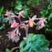 különleges növények, izgalmas ismeretlen