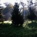 tájképek, ködös reggelen