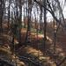 tájképek, őszi erdőben a billing telep