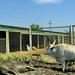 Gyöngyös Állatkert